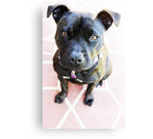 Milly Is My Name  Canvas Print