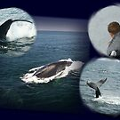 Whale Watch Collage! by Linda Jackson
