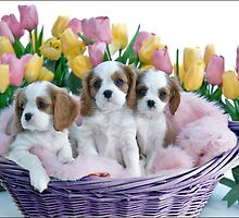 Briana's Pups in a Basket by Michael Waine