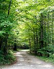 Into the Woods by Debbie Pinard
