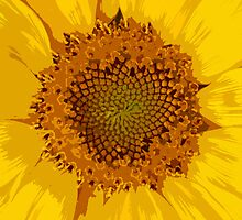 Sunflower by ANWPhotography
