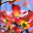 Dogwood bloom by Courtneystarr