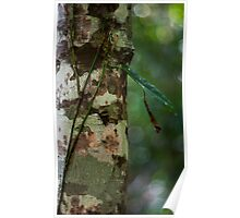 Lichen - Patterns & Colours Poster