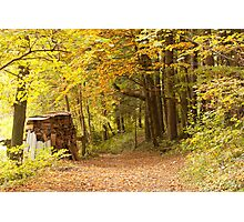 Mystic Path In A Golden Forest  Photographic Print