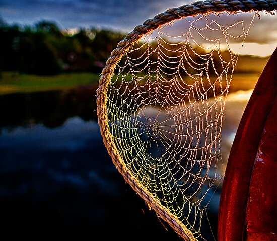 Dawn's Web by Kathy Weaver