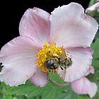Bee on a Blossom by WienArtist