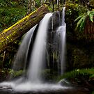 A Place To Rest ~ Upper Quartzville Creek ~ by Charles &amp; Patricia   Harkins ~ Picture Oregon