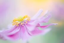 Anemone Float by Jacky Parker