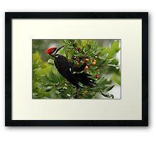 pickin berries Framed Print