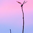 """Dragonfly Twilight"" by John Hartung"