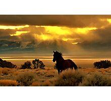 High Desert Gold Photographic Print