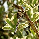 Migrant Hawker by bigjoeman07