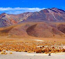 Small Zorro - Large Volcano - Uyuni National Park by Honor Kyne