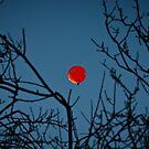 Red Balloon by Anthony Evans