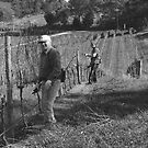 Pruners, Carey Gully, Adelaide Hills by Adam Dutkiewicz