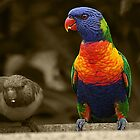 rainbow lorikeet by Steve Scully