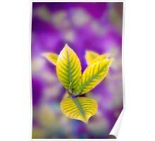 Fleur II Poster
