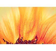 Sunflower II Photographic Print
