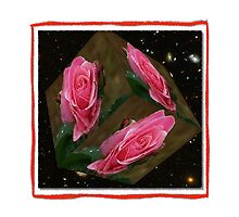 Pink Rose Cubed Space by Jonice
