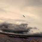 Plane in the Cairngorms by Peter Ackers