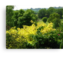 Essex Countryside Canvas Print
