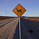 Funny warning sign road : Lama crossing the road, Uyuni highlands, Salar, Sud Lipez, Chile border, Bolivia, South america by Thibaut PETIT-BARA