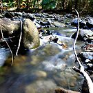 Mason's Swimming Hole ~ Daintree National Park by melodyart