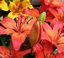 Red and Orange Lilies in the Rain by BlueMoonRose