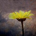 Sundays joy giver.....  by DaveHrusecky
