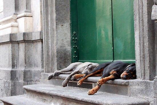 Lazy Day by tedlin