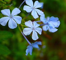 Blue Flower by AndrewWilson94