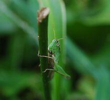 Grassy Hopper by Wviolet28