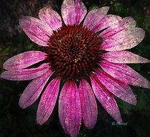Pink by Mansibhatia