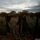 Wild Flowers At Dusk Western Australia by Tawnydal