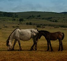 White Horse & Little Brown Foal by Lucie Rovná