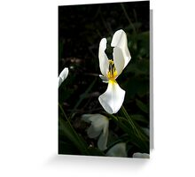 Flower 10 Greeting Card