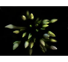 The Nature of Things - Continuum Photographic Print