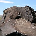 Petroglyph National Monument - Albuquerque, NM by ACBPhotos