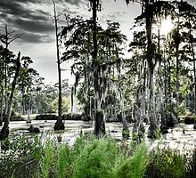 Sam Houston Swamp-3 by RKimages