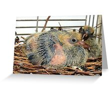 Little Birds - Love for Pigeons Greeting Card