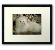 Snow Puff...I'm so beautiful... © Framed Print