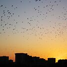 Birds on sunset by Federico Del Monte