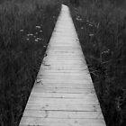 meadow walkway by lukasdf