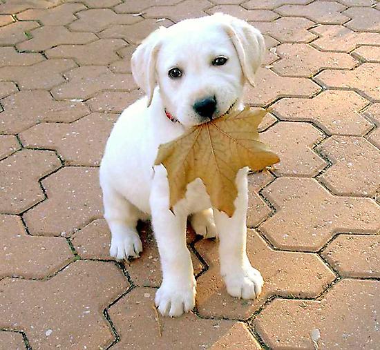 Patriotic Puppy by vette