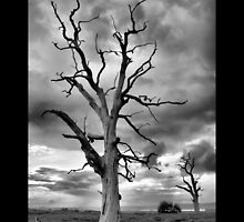 BW Tree by samwisewoahzay