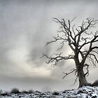 Winter Tree Landscape by samwisewoahzay