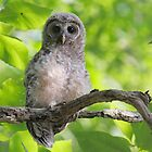 Baby Owl by RPAspey