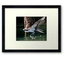 Trout Fishing in Oregon Framed Print