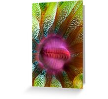 Cup Coral Portrait Greeting Card