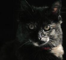 Shadow Cat by yolanda